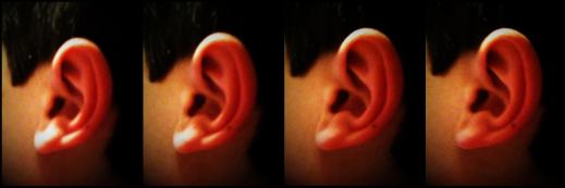 Many ears